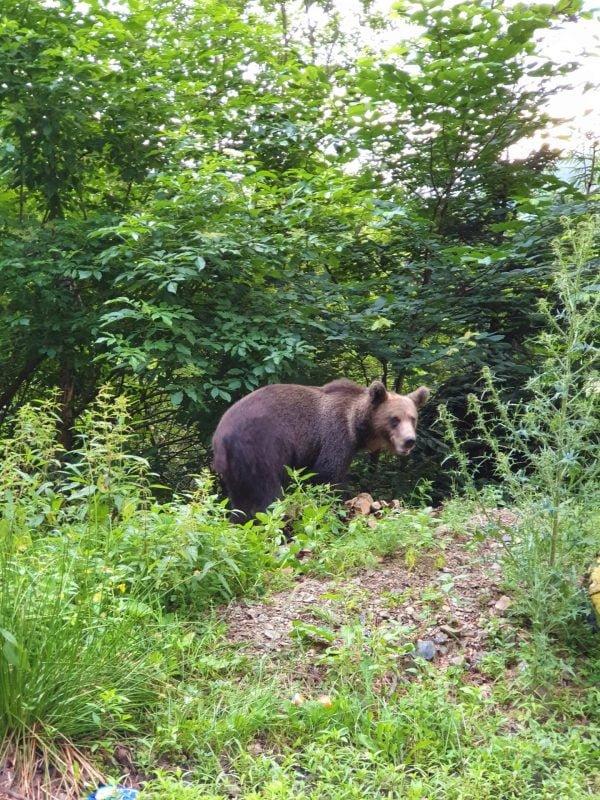 Urs Transfăgărășan