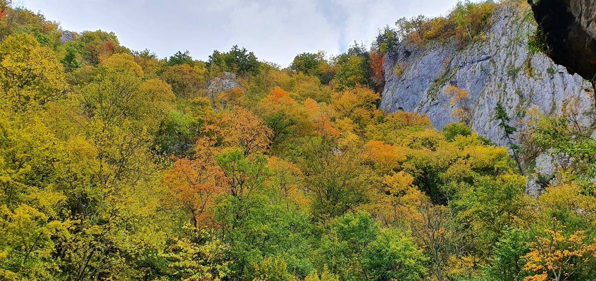 Vedere din Peștera Șura Cailor - Cheile Vârghișului