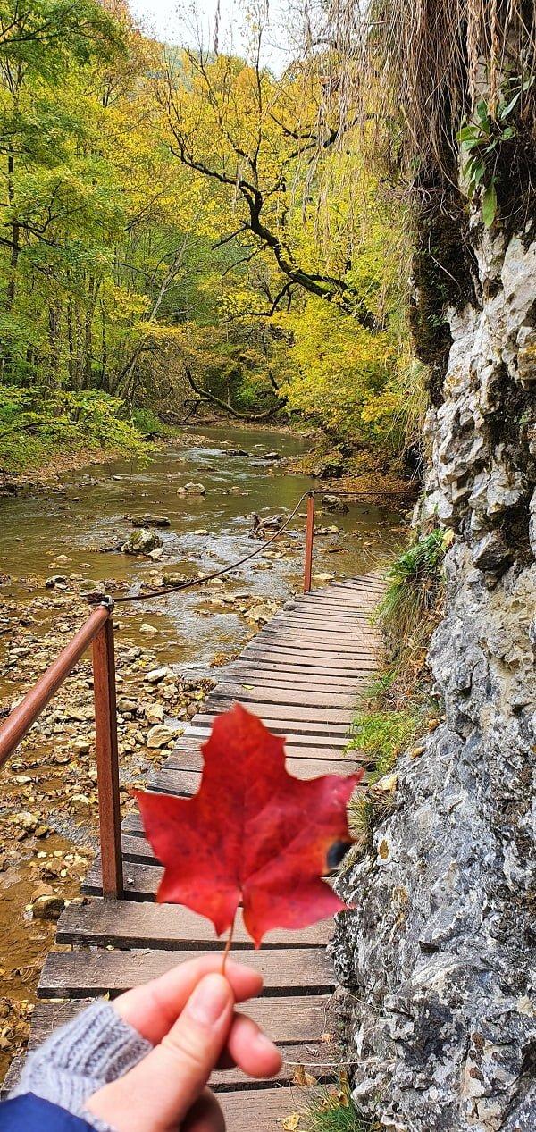 Cheile Vârghișului - Munții Perșani